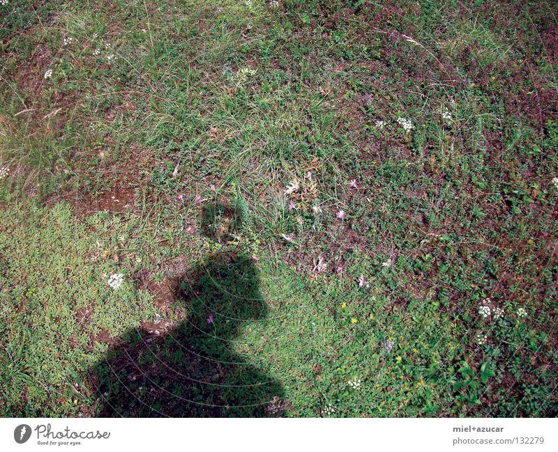 Nature Green Summer Joy Meadow Fantasy literature Halo