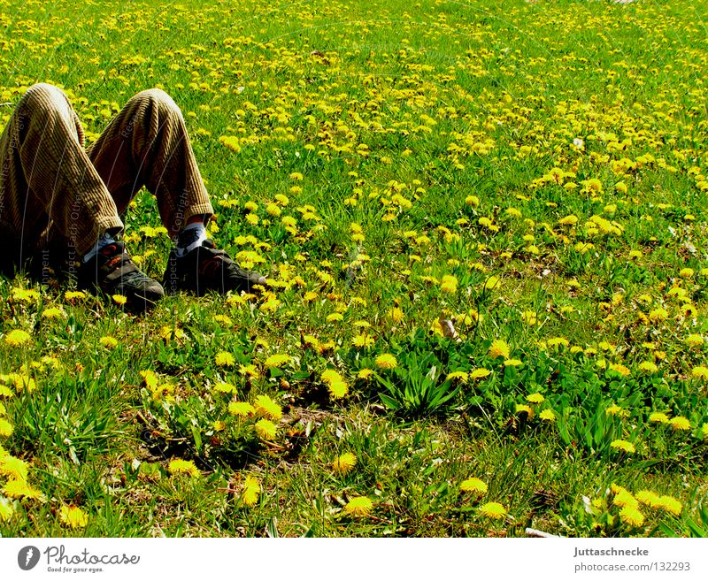 m Break Relaxation Meadow Dandelion Flower meadow Sleep Yellow Summer Spring Green Lie Dream Footwear Beige Brown Power Force lie down in childhood Contentment
