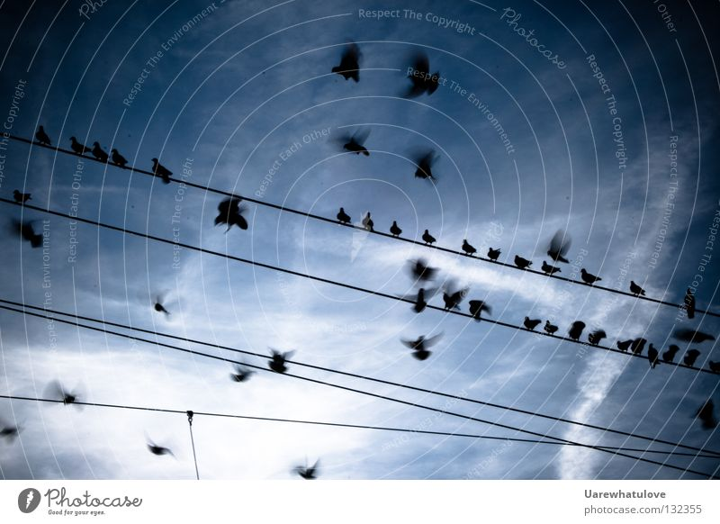 Return from Sunday flight Pigeon Bird Together Relaxation Electricity pylon Cable Clouds Railroad Overhead line Train station Flying Aviation Wing Movement Sit