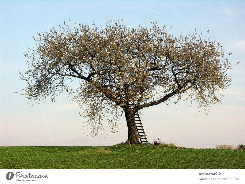 The tree in spring Tree Meadow Field Ladder Hunting Blind Plow Old Old fashioned Blossom Spring Life Horizon Sky Far-off places Land Feature Germany