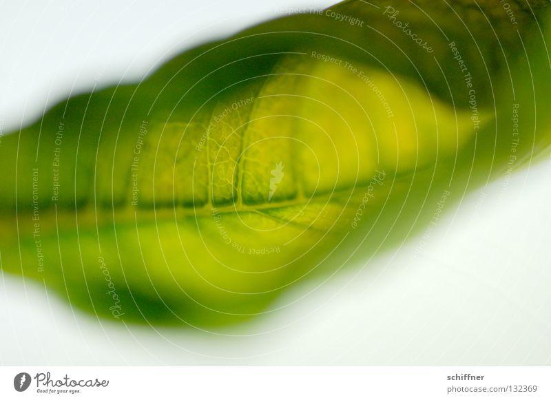 Green Plant Soft Dry Vessel Slide Rachis Houseplant Rolled Fabric softener