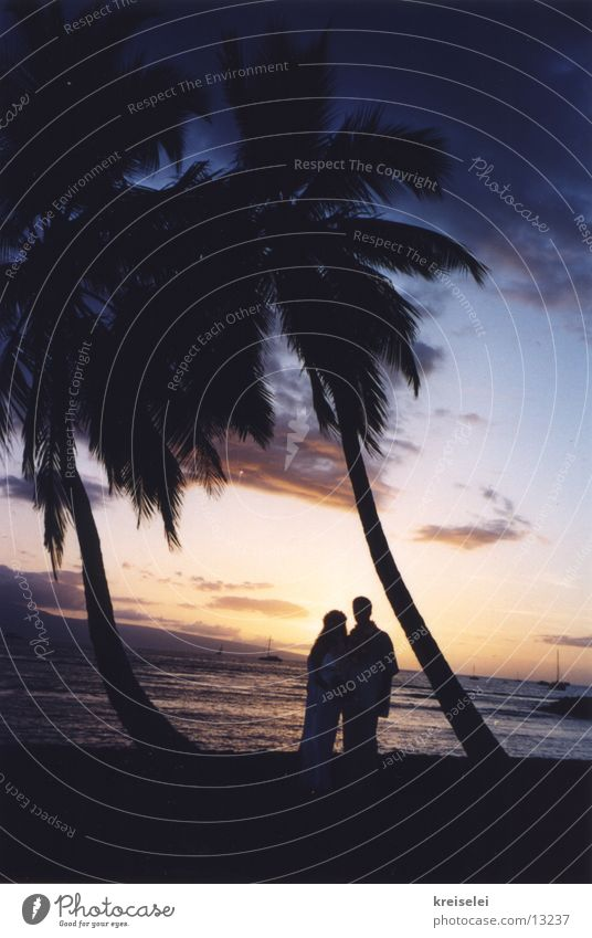 Sky Vacation & Travel Beach Ocean Wedding Romance Kitsch Palm tree Dusk Lovers Married couple Cliche Characteristic Hawaii Pacific Ocean Honeymoon