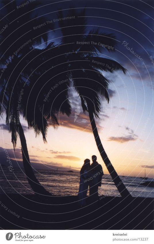 Wedding under palm trees2 Vacation & Travel Palm tree Hawaii Sunset Ocean Beach Sky Silhouette Back-light Dusk Palm beach Pacific Ocean Pacific beach