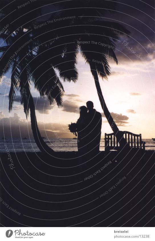 Vacation & Travel Love Couple In pairs Wedding Romance Kitsch Palm tree Dusk Lovers Married couple Cliche Characteristic Hawaii Pacific Ocean Honeymoon