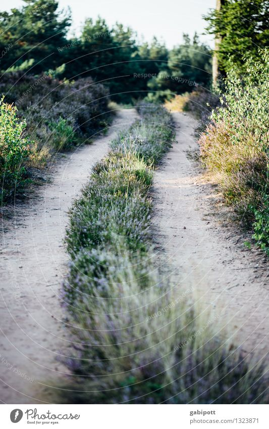 The way and the goal and all that... Environment Nature Landscape Animal Earth Autumn Beautiful weather Grass Bushes Meadow Field Forest Heathland Going Hiking