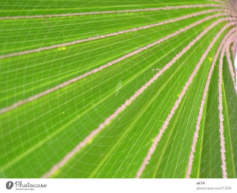 Green Palm tree Macro (Extreme close-up)