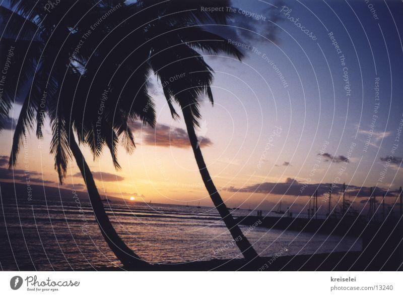 Sky Vacation & Travel Beach Ocean Palm tree Dusk Cliche Characteristic Hawaii Pacific Ocean Evening sun Palm beach Pacific beach