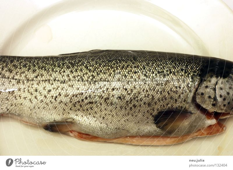 Ocean Fresh Nutrition Fish River Catch Fishing (Angle) Plate Disgust Tails Barn Water wings Raw Trout
