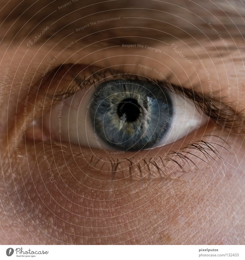 naïve Pupil Eyebrow Wake up Watchfulness Guard Concentrate Macro (Extreme close-up) Close-up Communicate Eyes Looking Senses eye watch SIN Human being Guy blue