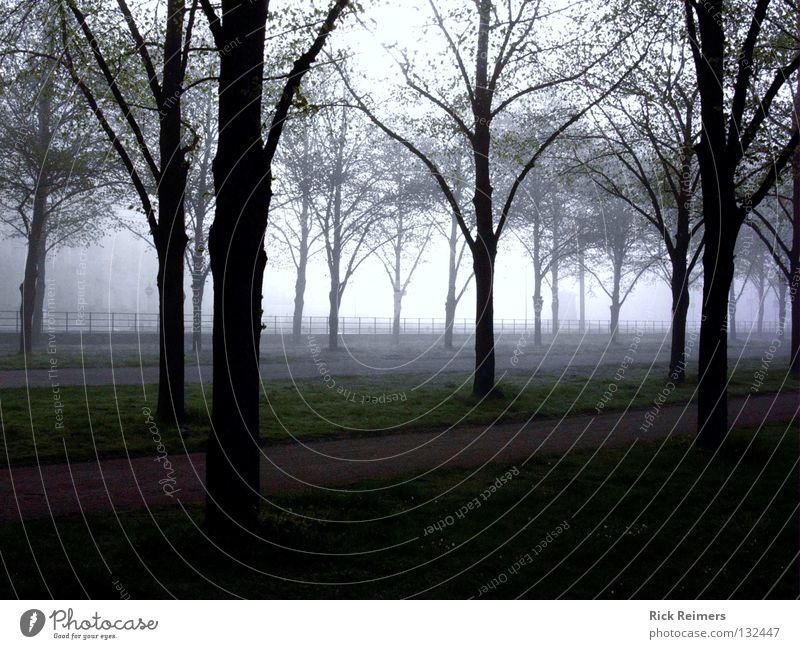 Nature Tree Calm Relaxation Garden Park Art Fog Romance Leisure and hobbies Mystic Hannover Herrenhausen-Stöcken mall