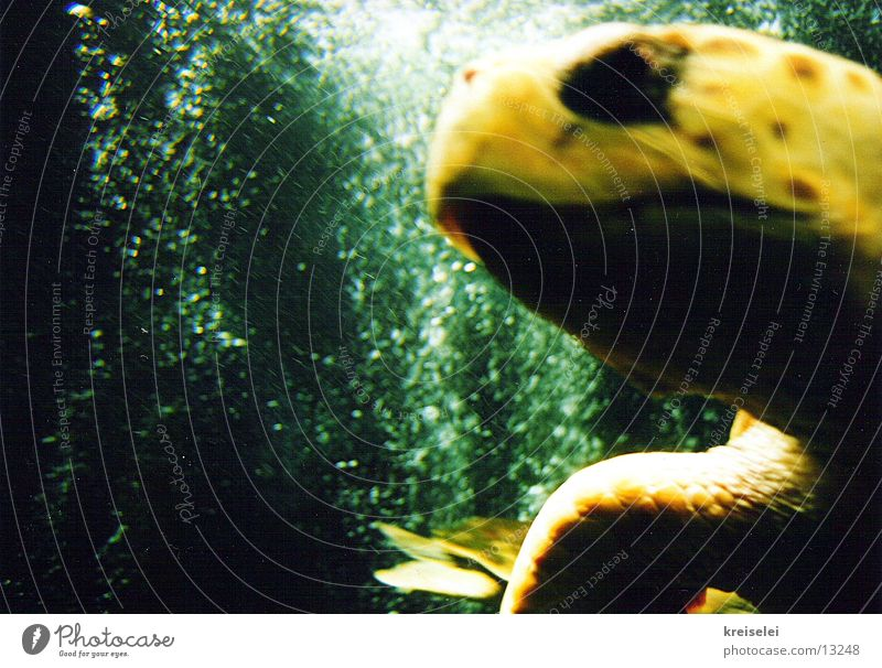Water Ocean Green Yellow Transport Aquarium Turtle