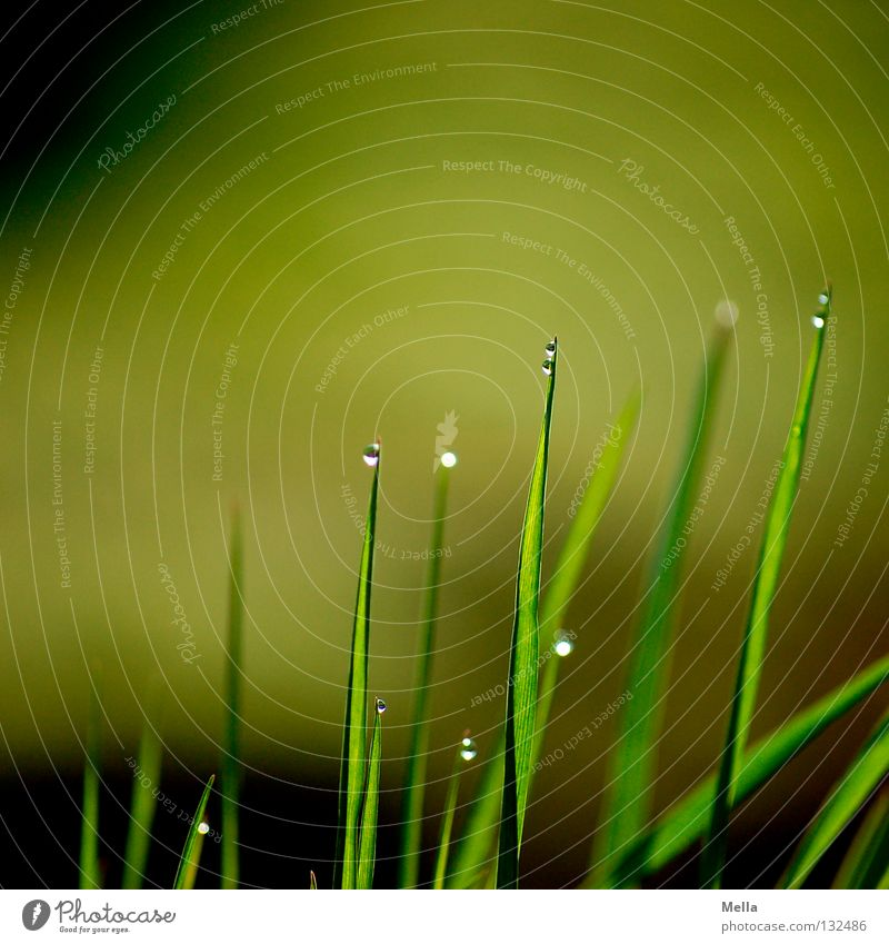 Nature Green Water Relaxation Calm Meadow Grass Above Rain Fresh Earth Perspective Drops of water Point Wet Rope