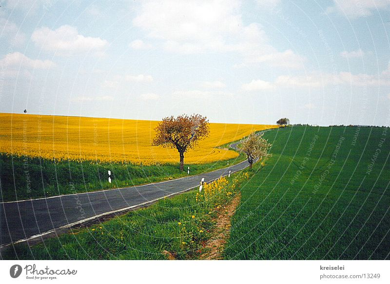 so green Field Canola Canola field Calm Sky Nature Street