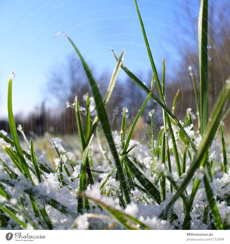 April weather Grass Meadow Morning Wayside To go for a walk Winter Spring Thaw Cold Wet Freeze Tree Green Snow Lanes & trails Drops of water Blue Sky Lawn