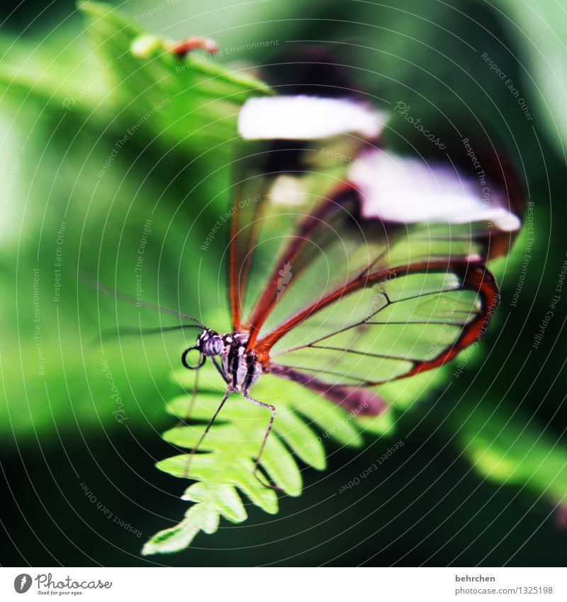 shaky Nature Plant Animal Spring Summer Bushes Fern Leaf Garden Park Meadow Wild animal Butterfly Animal face Wing glass wing butterfly 1 Relaxation Flying