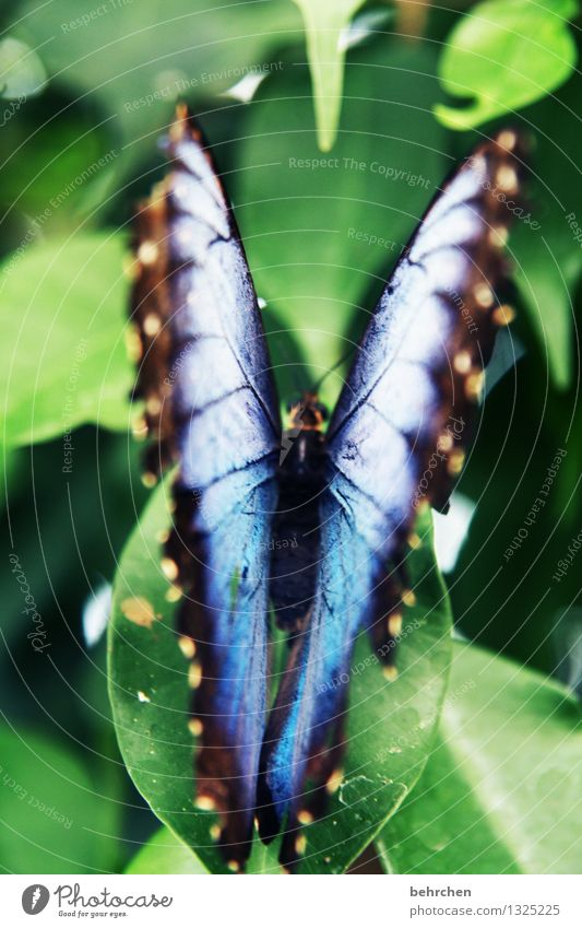 blue on green to 1. Nature Plant Animal Spring Summer Beautiful weather Tree Leaf Garden Park Meadow Wild animal Butterfly Wing blue Morphof age Observe