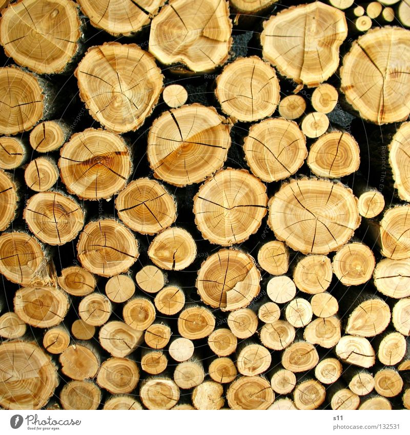 °Oo°oO Decoration Saw Axe Nature Tree Wood Line Round Brown Arrangement Tree trunk Indecisive Cut down Firewood Heat Fallen Light brown Annual ring Earmarked