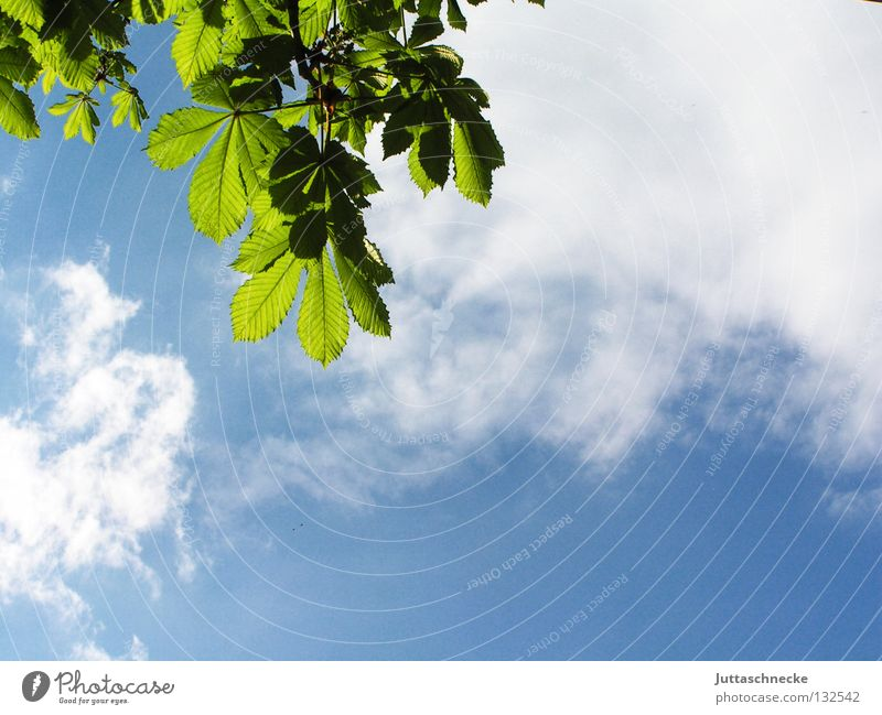 Nature Sky Tree Sun Green Blue Leaf Clouds Life Relaxation Above Spring Contentment Lighting Fresh New