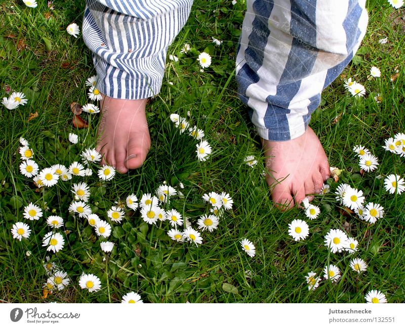 The pants are good! Barefoot Toes Pants Trouser leg Stripe Striped Meadow Grass Daisy Flower Stand Children's foot Healthy Green White Boy (child) Joy Summer