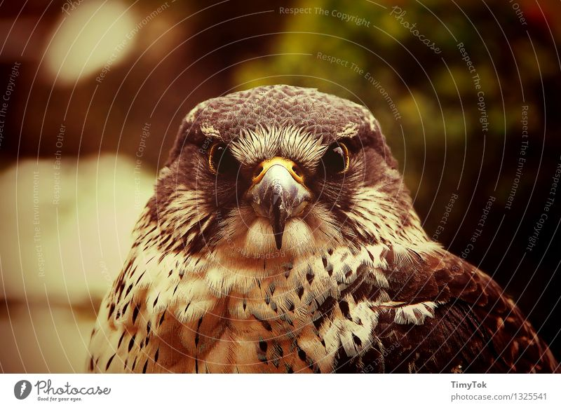 In the eye of the hunter Nature Animal Wild animal Bird Animal face Hawk eye Goshawk 1 Self-confident Power Brave Multicoloured Exterior shot Deserted Day