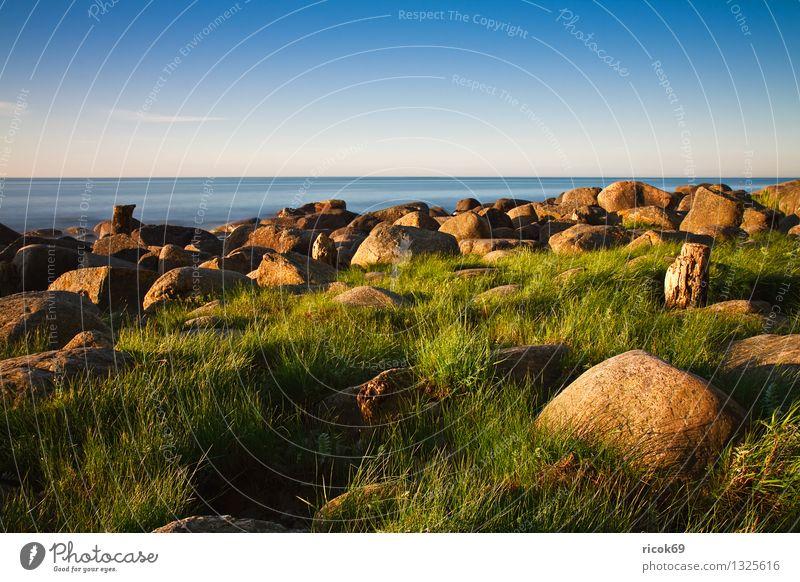 Baltic coast Vacation & Travel Beach Nature Landscape Water Cloudless sky Grass Rock Coast Baltic Sea Ocean Stone Wood Blue Green Romance Idyll Calm Tourism