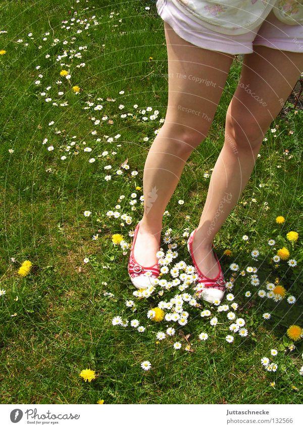 Beautiful Flower Green Red Summer Joy Meadow Garden Feet Warmth Footwear Legs Going Lawn Stand