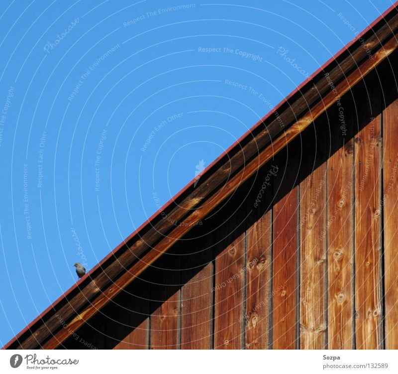 diagonal Diagonal Bird Wood Roof House (Residential Structure) Sky Blue Life