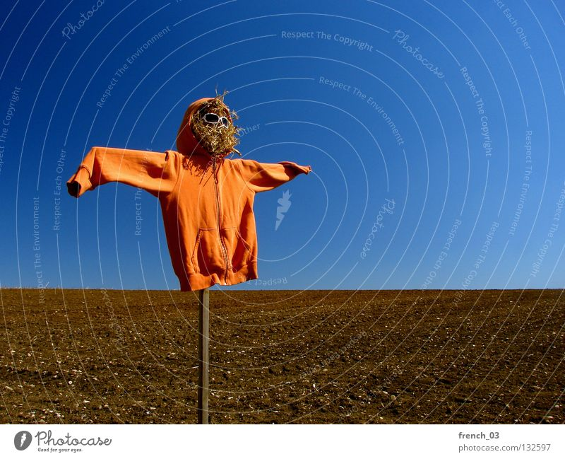Sky Nature Blue Loneliness Landscape Freedom Wood Stone Line Orange Brown Horizon Bird Field Earth Fear