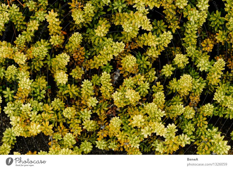 natural pattern Environment Nature Landscape Plant Flower Grass Bushes Moss Fern Leaf Blossom Foliage plant Wild plant Exotic Natural Beautiful Yellow Green