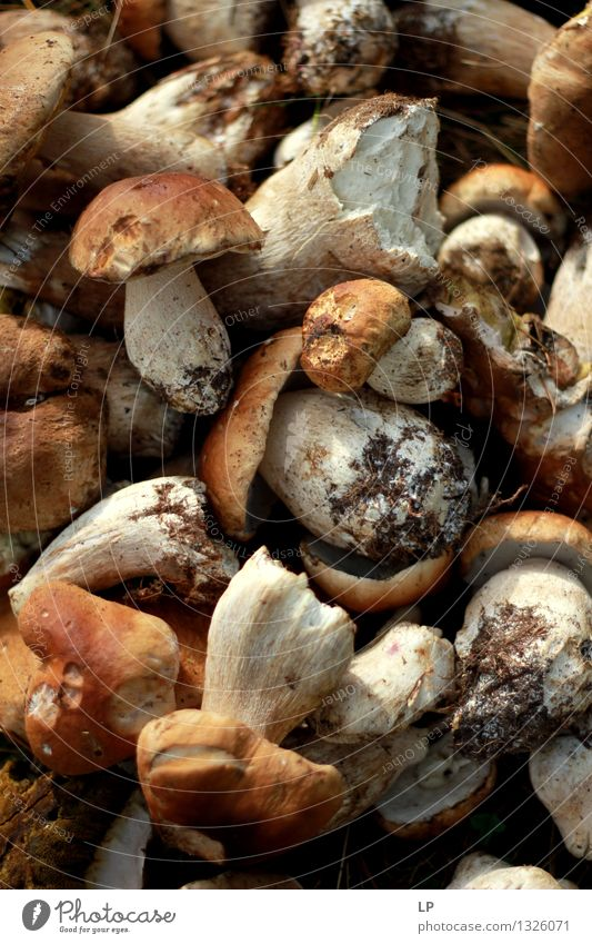 shrums 1 Food Mushroom Boletus edible boletus Nutrition Organic produce Vegetarian diet Diet Fasting Slow food Italian Food Lifestyle Leisure and hobbies