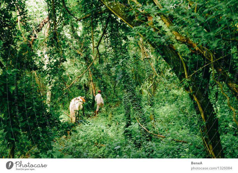Human being Nature Plant Tree Landscape Animal Forest Environment Going Masculine Wild Hiking Trip Adventure Agriculture Horse