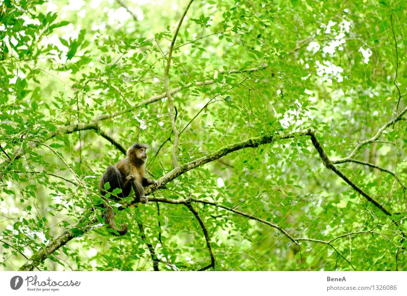 monkey Environment Nature Plant Animal Tree Foliage plant Wild plant Exotic Forest Virgin forest National Park Argentina South America Wild animal Animal face