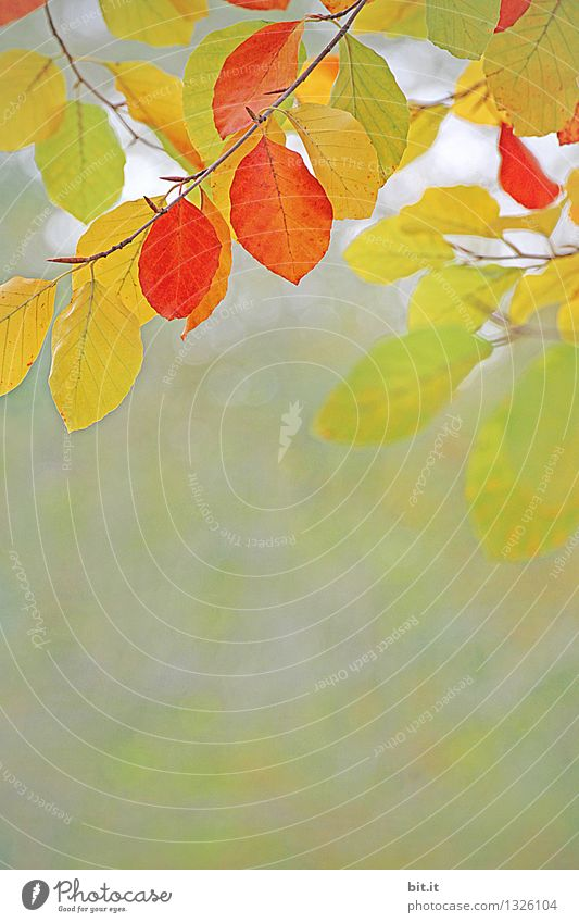 Nature Vacation & Travel Plant Tree Leaf Forest Warmth Autumn Garden Time Moody Park Orange Wind Transience Change
