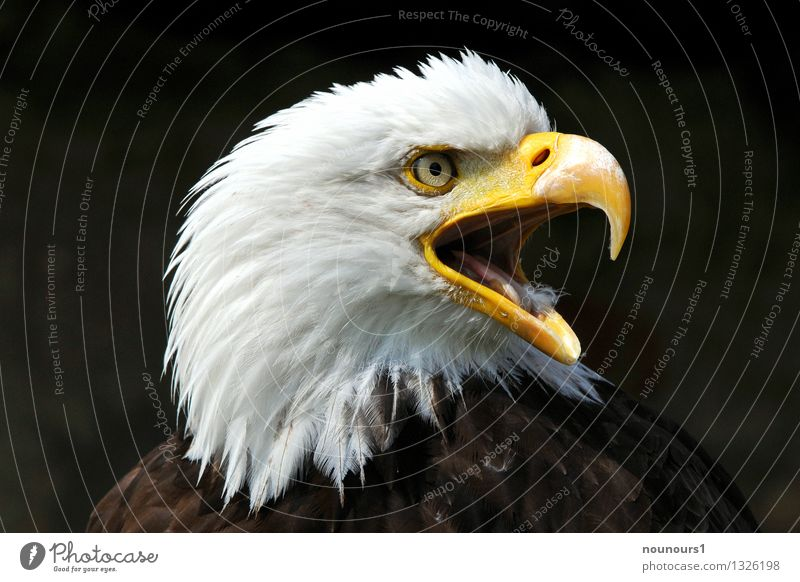 Animal Bird Wild animal Scream
