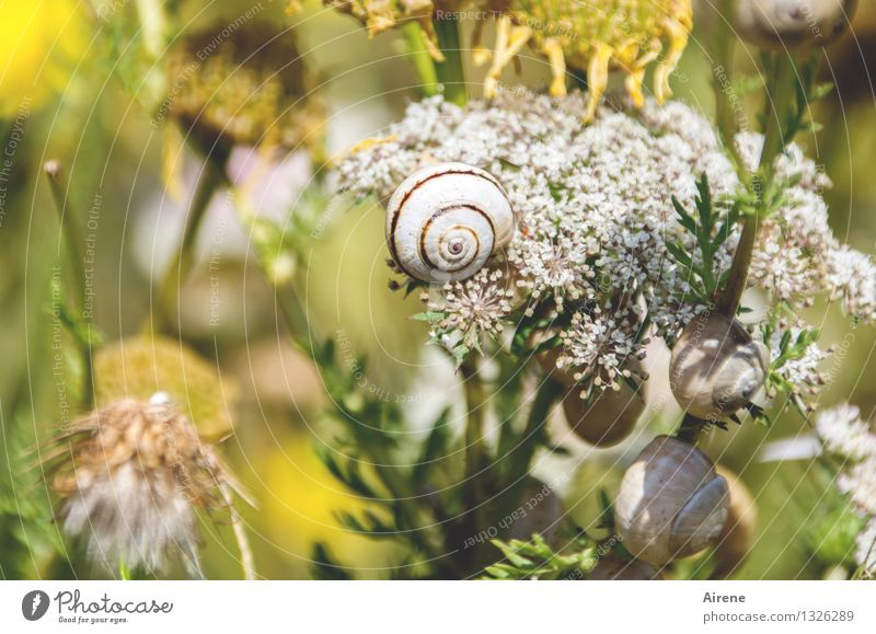 Plant Green White Flower Animal Yellow Grass Funny Together Gold Crazy Communicate Group of animals Meeting Spiral Snail