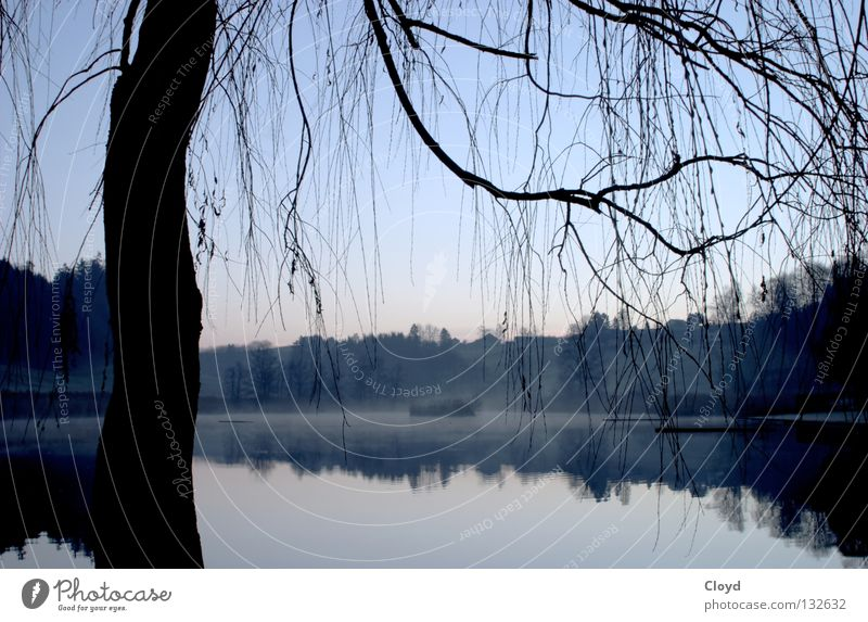 calm of the water Pond Undisturbed Lake Tree Back-light Calm Peace Morning Mirror Mirror image Progress Loneliness Water Branch Line Silhouette Blue Island