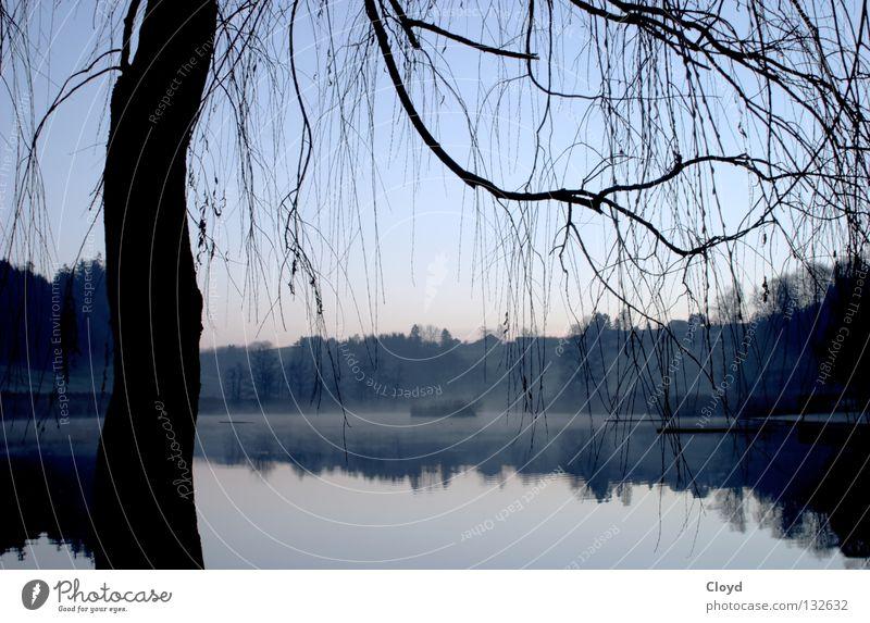 Nature Water Tree Blue Calm Loneliness Lake Line Island Peace Branch Mirror Pond Progress Mirror image Undisturbed