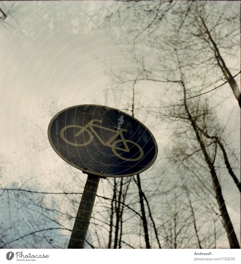 cycle path Cycle path Bicycle Footpath Tree Forest Wire netting Wire netting fence Double exposure Medium format The Assumption Cycle race Mobility Street sign