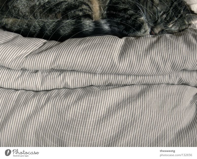 Calm Relaxation Dream Cat Warmth Contentment Sleep Bed Soft Peace Lie Physics Idyll Cozy Mammal Harmonious