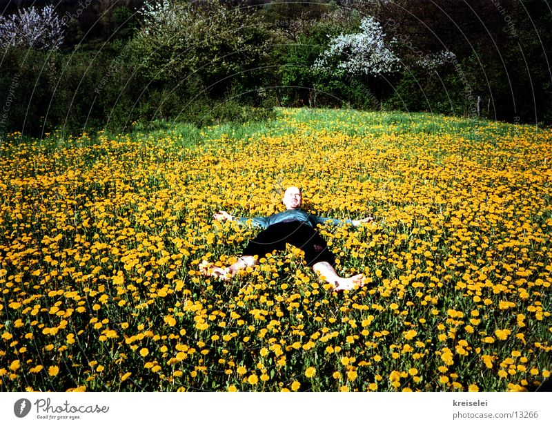 Flower Green Yellow Relaxation Meadow Blossoming Dandelion