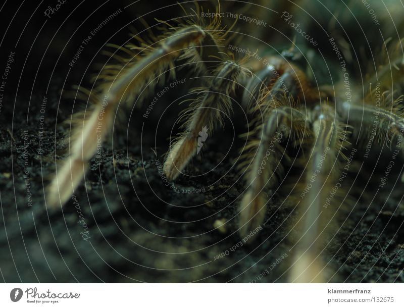Earth Spider Section of image Monster Terrarium Spider legs Bird-eating spider