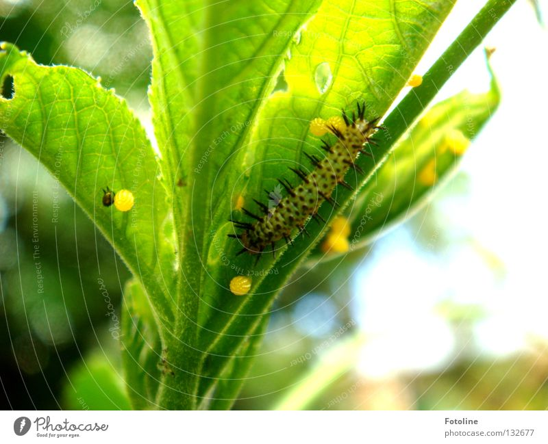 insatiable appetite Plant Leaf Butterfly To feed Butterfly Garden Zoo Slip Caterpillar Egg Hollow Doll pupated