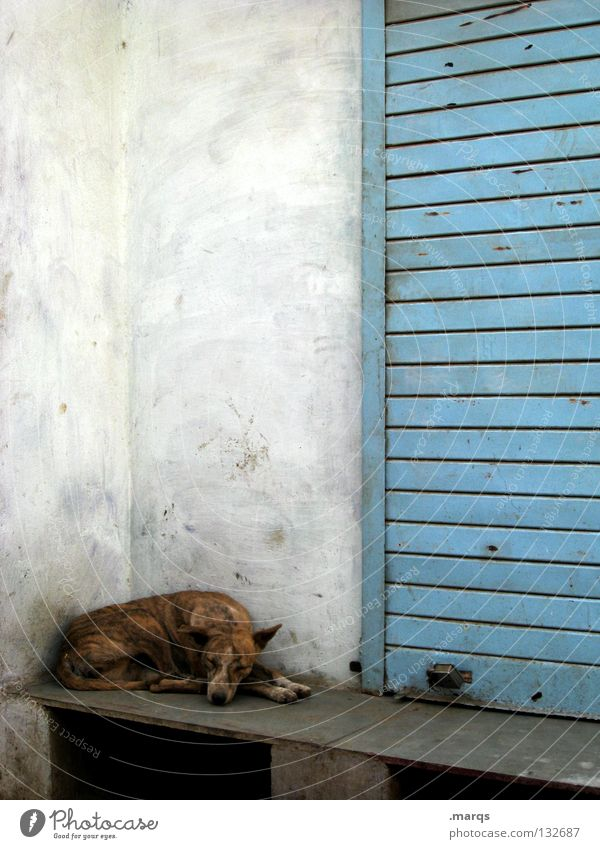 rest Sleep Siesta Doze Break Withdraw Dog Animal Pet Crossbreed Wall (building) White Udaipur India Summer Mammal Lie be far off Fatigue Comfortable Relaxation