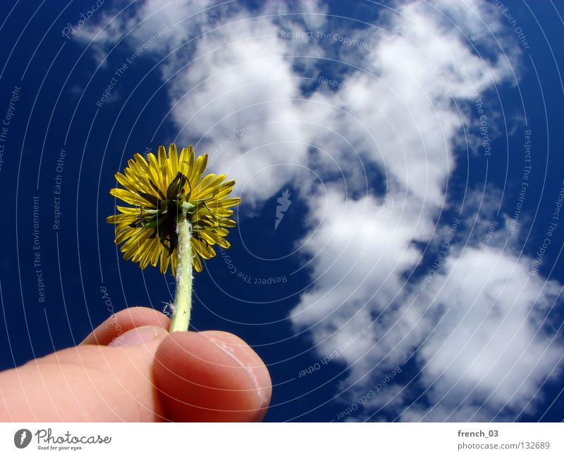 Sky Nature Blue Hand Green Plant Flower Clouds Loneliness Yellow Life Emotions Blossom Sadness Think Spring