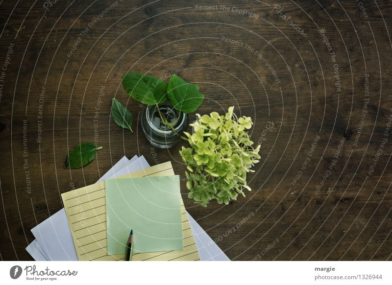I can't think of anything... Decoration Desk Study Office work Workplace To talk Plant Flower Leaf Blossom Hydrangea blossom Stationery Paper Piece of paper Pen