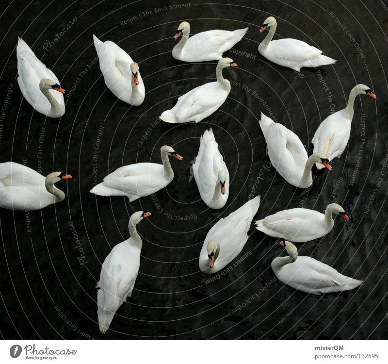 Old Water White Beautiful Red Colour Animal Calm Relaxation Dark Gray Lake Friendship Bird Swimming & Bathing Together