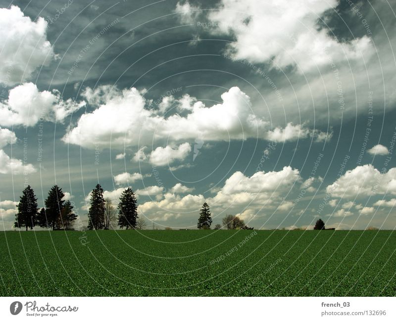 Sky Blue Green Tree Clouds Relaxation Far-off places Landscape Dark Meadow Cold Warmth Grass Spring Freedom Gray