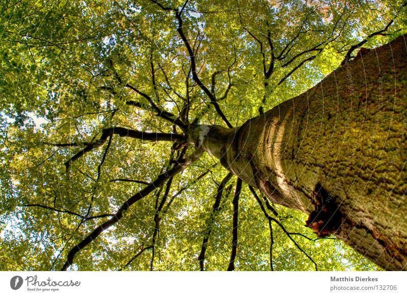Green Beautiful Tree Summer Leaf Forest Dark Autumn Freedom Above Wood Lanes & trails Air Rain Bright Lighting