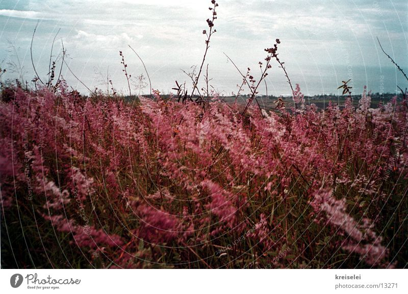 The wind's blowing! Field Grass Red Sky Nature Landscape Wind