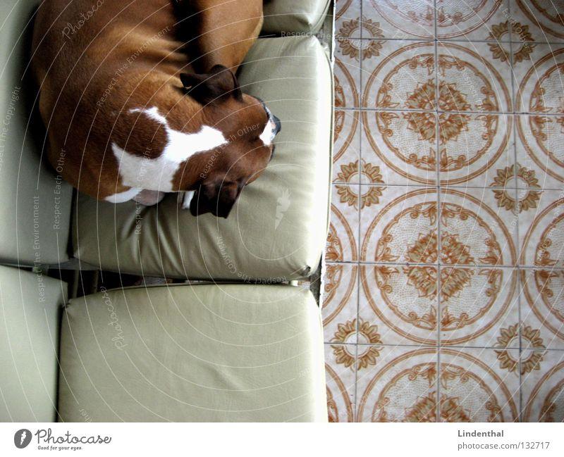 Relaxation Dog Sleep Break Floor covering Sofa Mammal Cushion Boxer